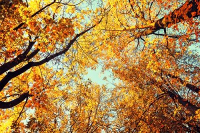 Tips for taking care of your trees